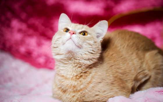 cute, кот, розовый, iphone, best, kitty, hello, inspiration,