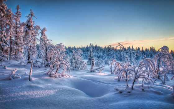 winter, снег, природа, иней, card, trees,