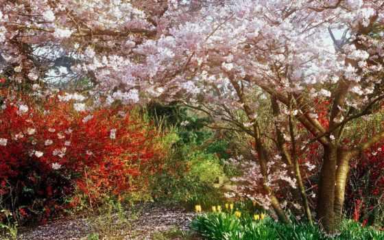 весна, природа, garden