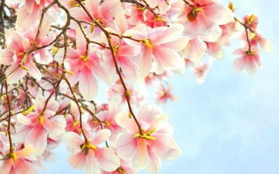 postcard, день, cvety, worker, дед, бабушка, красивый, утро, днем, род, preschool