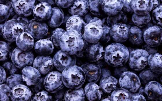 черника, ягода, качество, использование, текстура, большой, еда, сонник