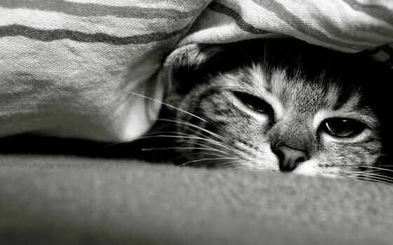 грустный, кот, морда