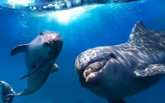 дельфины, море, дельфинов,