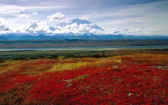 denali, park, national, аляска, национальные, парки,
