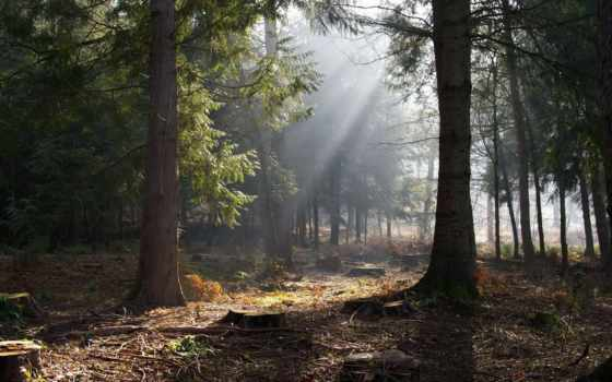 лес, фея, лесная, саншайн, print, люди, холсте, картин, сквозь, rays, музыка,