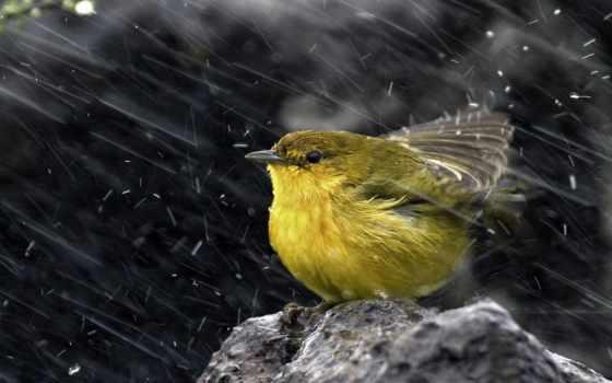 птичка, сидит, руки, опускайте, усталости, beat, воробей, будет, life, bila,
