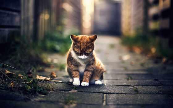 грустные, улице, котенок, колени, мордочкой, холодным, перчатками, грустит, осенним, утром, безлюдной,