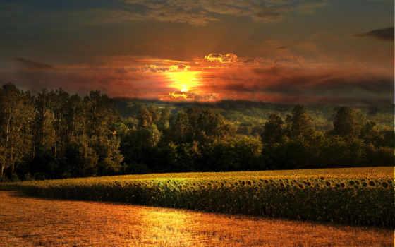 поле, закат, подсолнухи, лес, природа, небо,