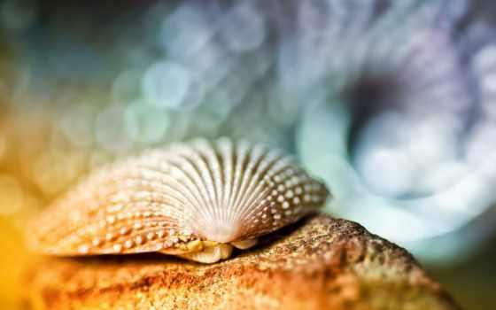seashell, макро, мойка, свет, рак, отшельник, боке, песок, небо, яndex, блики,