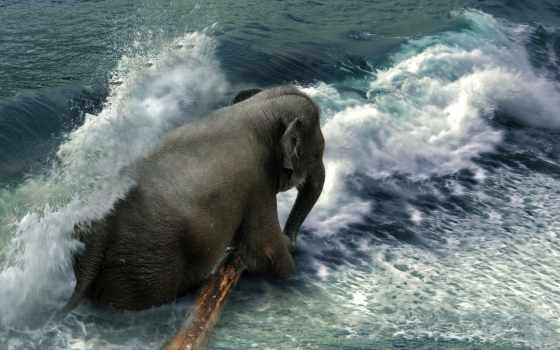 liu, even, фото, manipulations, amazing, elephants, pinterest,