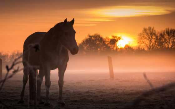 разное, лошади, zhivotnye, sun, лошадь, торрент, туман,
