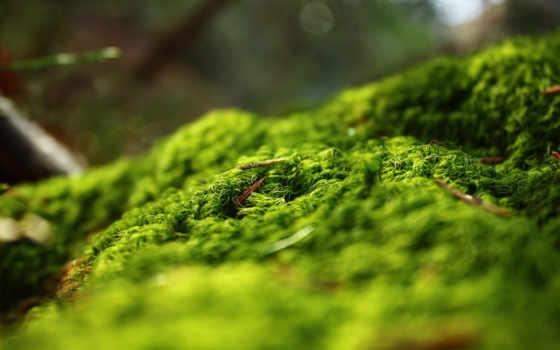 мох, природа