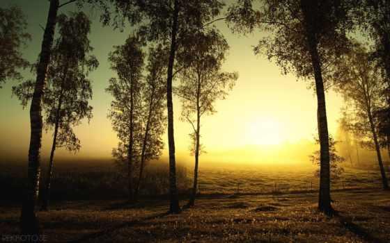 осень, поле, березы, sun, trees,