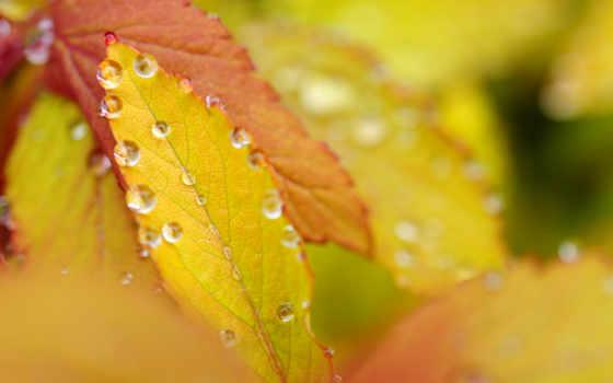 роса, листва, осенние, листья, капли, свет, color, обсуждение, liveinternet, leaf,