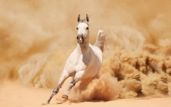 white, лошадь