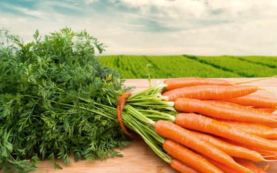 морковь, моркови, производить, еда, ха,
