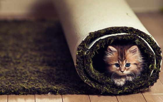 zhivotnye, котята, кошки