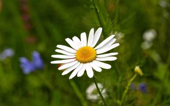 Цветы 25460