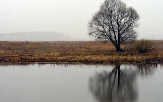 природа, дерево Фон № 31555 разрешение 1920x1080