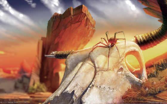паук, череп, пустыня