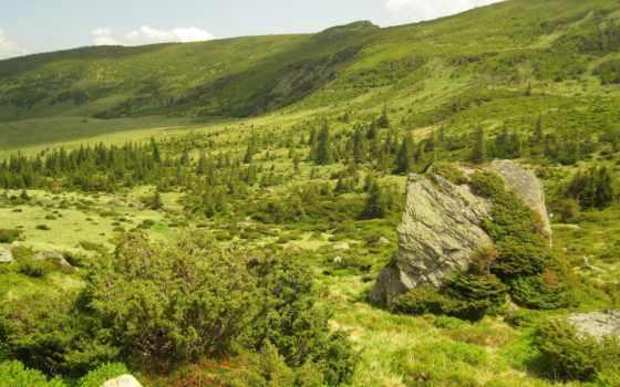 природа, красивые, самые, заворожительные, неповторимой, природой, нежной, прекрасной, умиротворяющей, поле, трава,