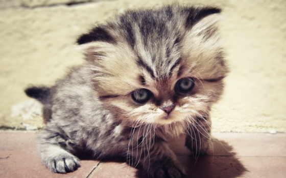 котенок, nice, тюлень, телефон, картинка, пушистый, кот, фото,