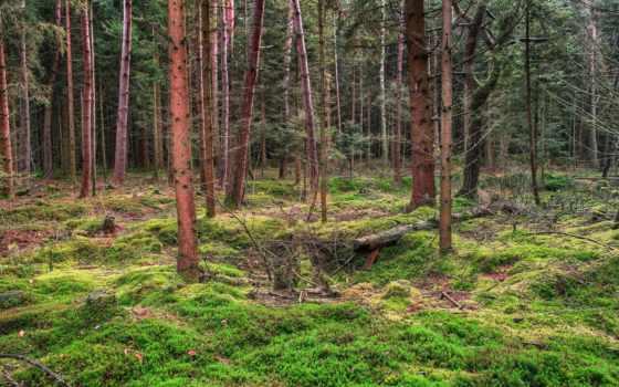 лес, природа, лесные, landscape, мох, пейзажи -, заставки,