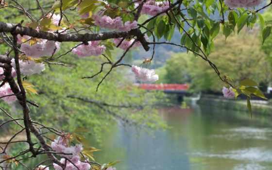 landscape, весна, фотографий, интересные, японию, фотопутешествие, природа,