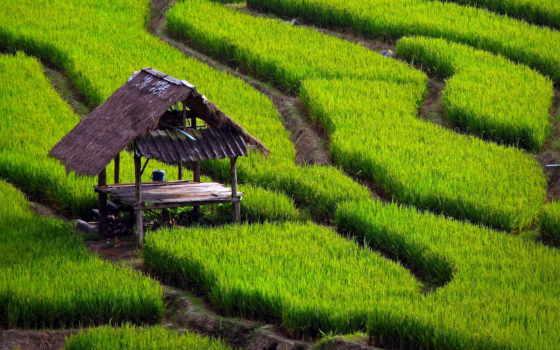 рисовые, margin, дорожки, трава, балдахин,