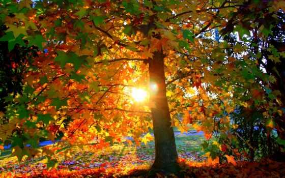 красивые, дерево, осень, свет, закат, park, заставки, sun, листва, только, daily,