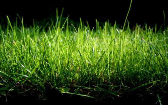 трава, природа, макро, зелёный, pleasant, тона, нежные,