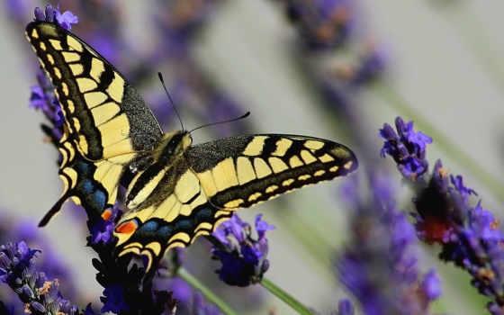 бабочка, footage, lavender, цитата, сообщение, цветет, time, summer, клипарт, optical, community