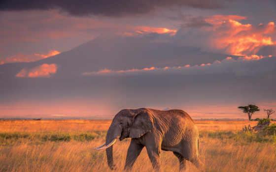 слон, африка, landscape, закат, animal, животные, природа, amboselus, african, viaje, небо