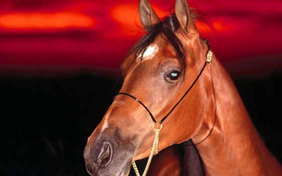 horse, лошади