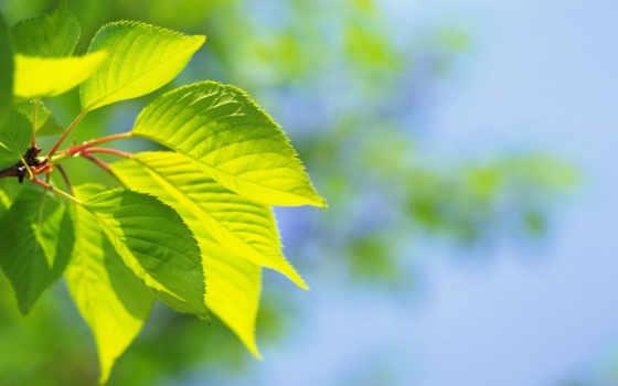лето, лист
