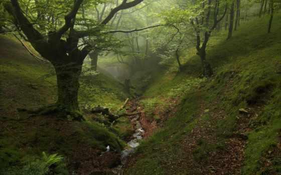 лес, trees, овраг, ручей, осень, природа, река, мох, goodfon, дерево,