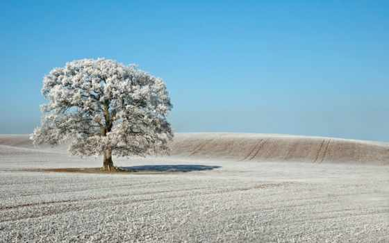 иней, gyves, поле, дерево, природа, allah, терпеливыми, landscape, июнь, god,
