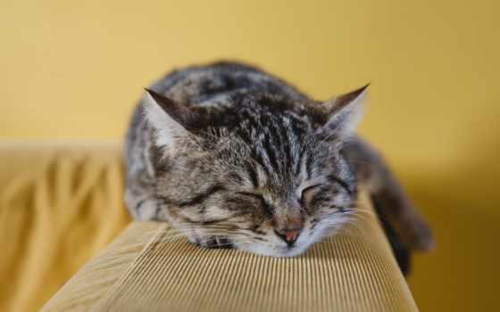 , кот, диван, спит,