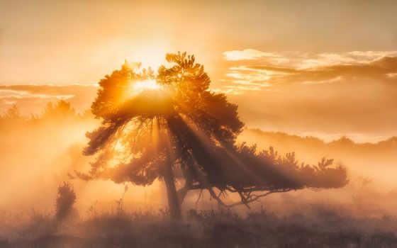 sun, утро, сосна, shining, дерево, небо, лучи,