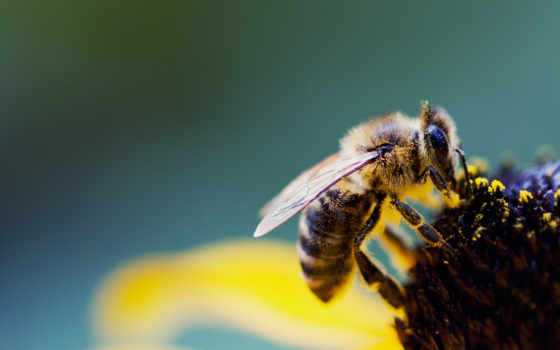 video, пчелка, full