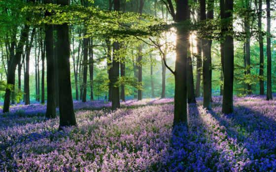 цветы, лесов, пейзажи