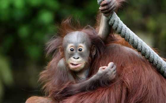 животные, обезьяны, фотографии