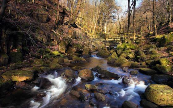 весна, лес, река