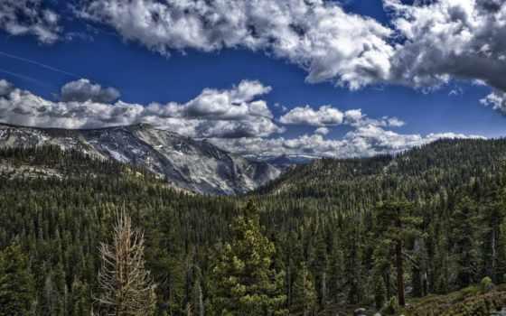 mountains, гора, дерево