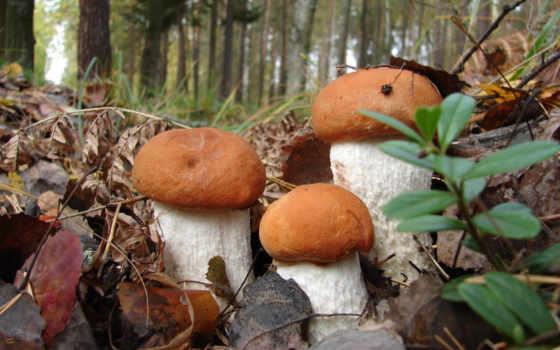 mushroom, свой, цитатник