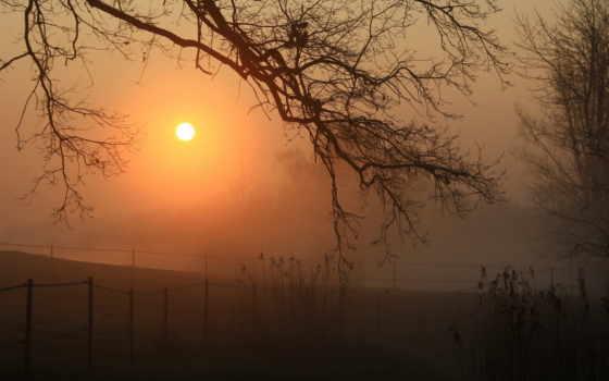 природа, туман, landscape