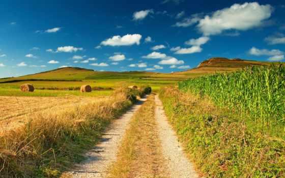 поле, дорога, corn, небо, природа, голубое, сено, зрения, summer, проселочная,
