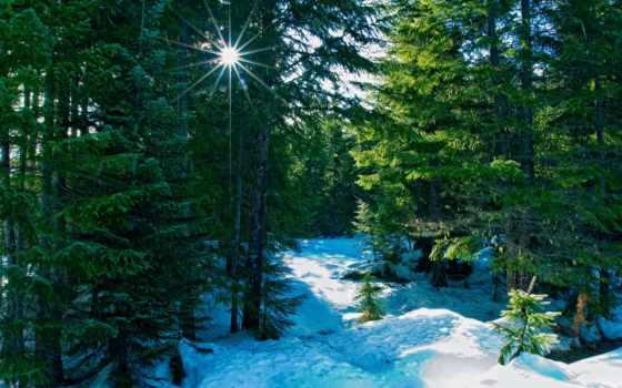 winter, природа, лес, rays,