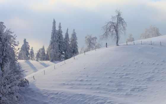 буря, снег, winter, art, trees, knowledge, природа, blizzard, лес,