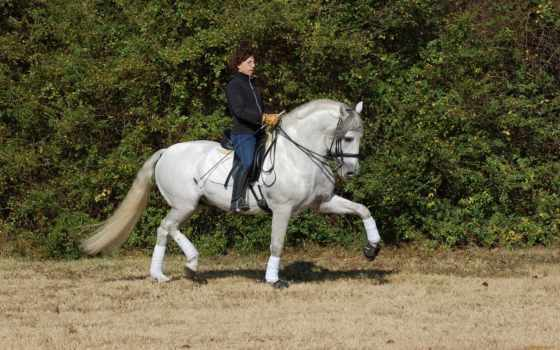 horses, страница, liked, самый, grand, prix,